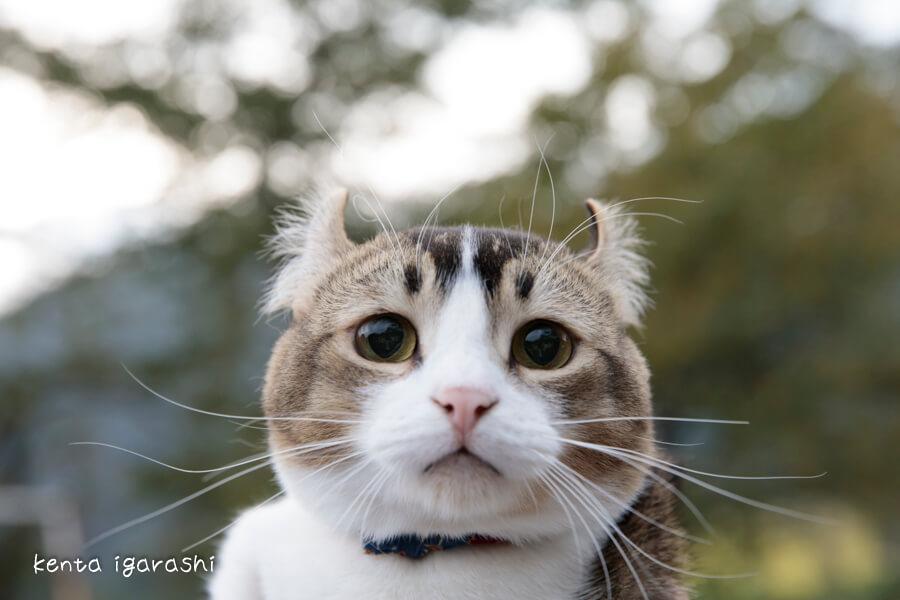 芦ノ牧温泉駅で活躍する人気猫「ぴーち施設長」の写真