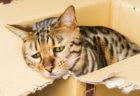 愛猫の暑さ対策してる?日本気象協会が「イヌ・ネコの熱中症予防対策マニュアル」を公開