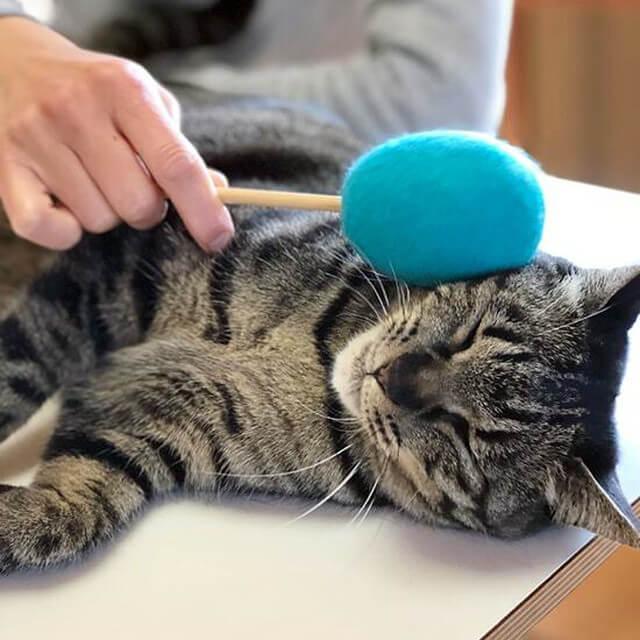 猫用のおもちゃ「ネコトントン」