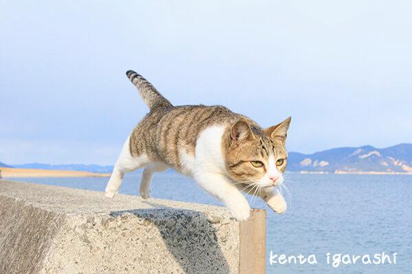 飛び猫 by 五十嵐健太