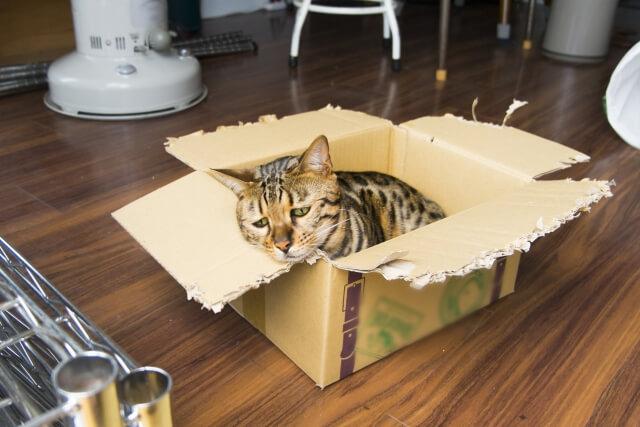 暑くて困った顔をしている猫のイメージ写真