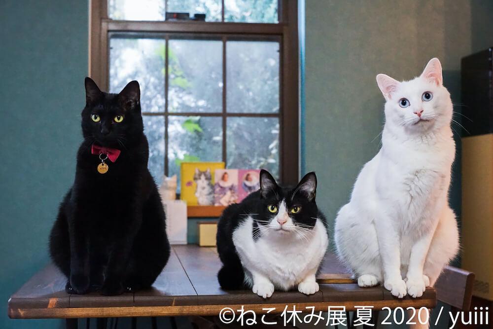 黒猫、ハチワレ、白猫の3ショット