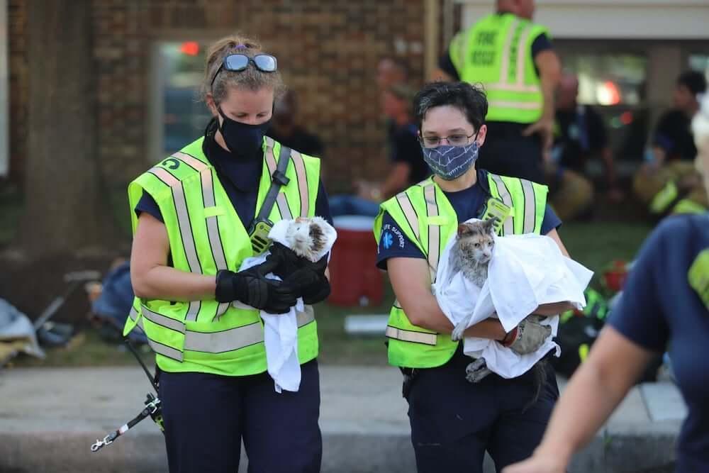 火事の現場から消防士に救助された猫とモルモット by 米国メリーランド州