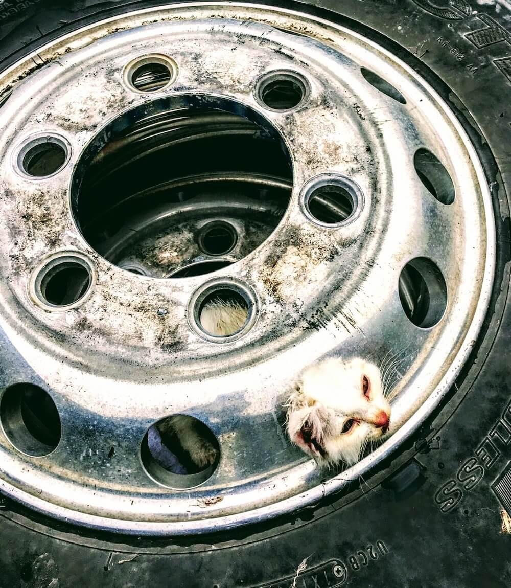 車のタイヤのホイールに頭が挟まって抜けなくなった猫 by 大垣消防組合消防本部