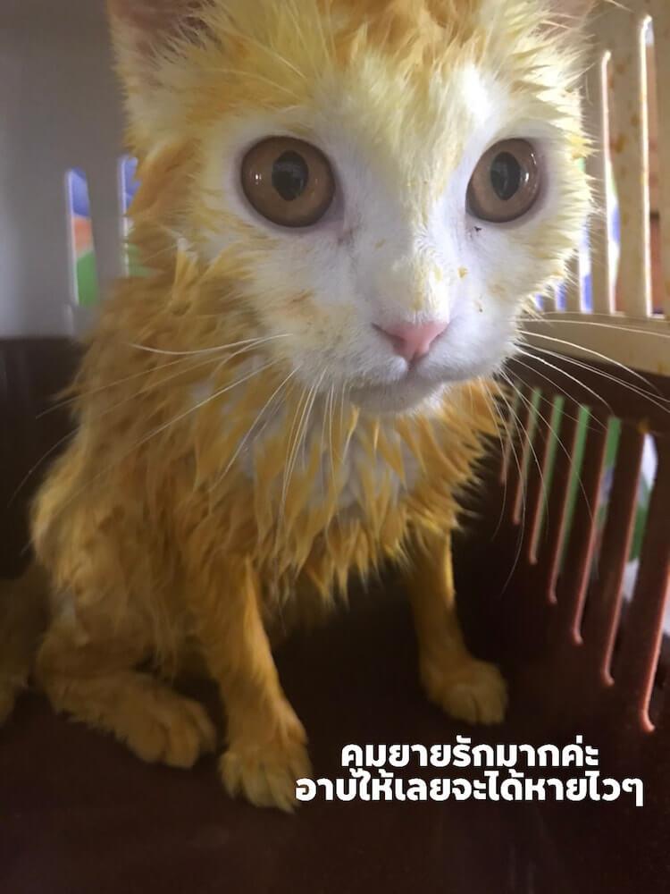 洗ってもターメリックの色が落ちない猫のKa-Pwong(カプウォン)