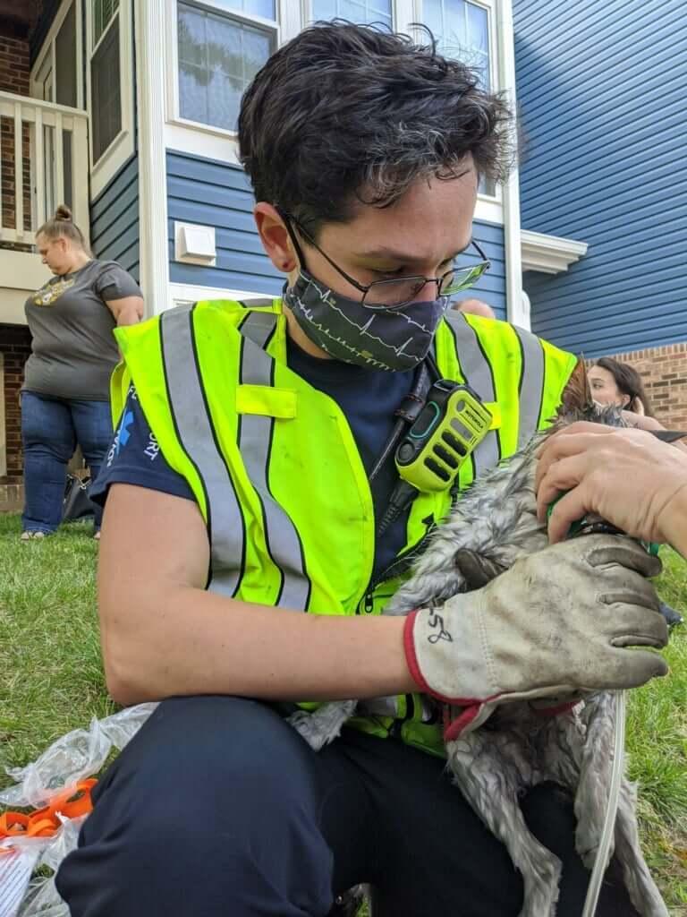 酸素マスクで酸素を投与される猫の様子 by 米国メリーランド州の火事現場