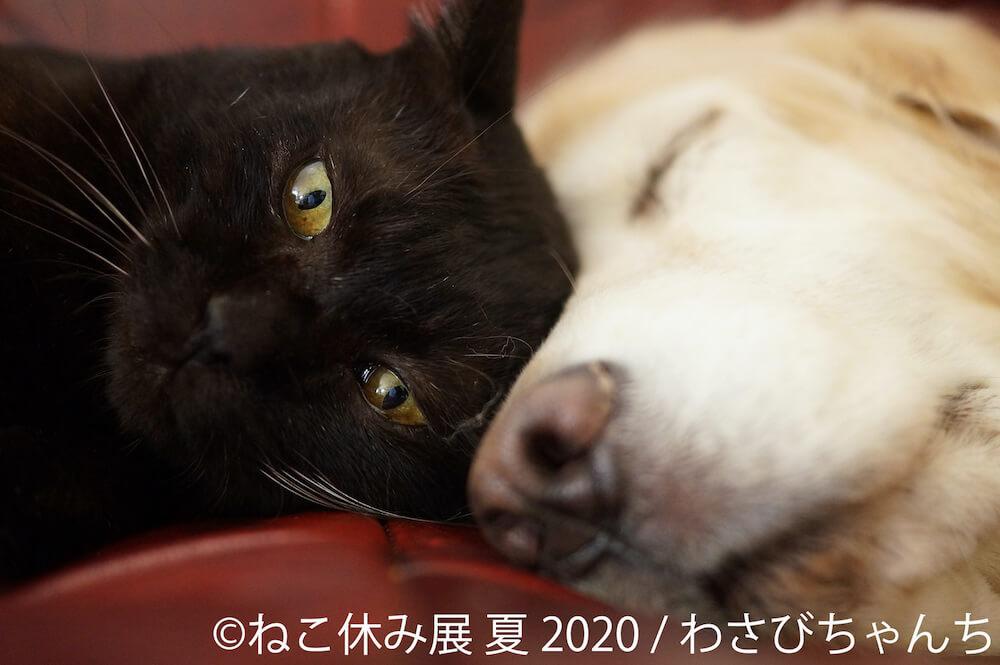 犬と顔を密着させて寝転ぶ黒猫 by わさびちゃんち