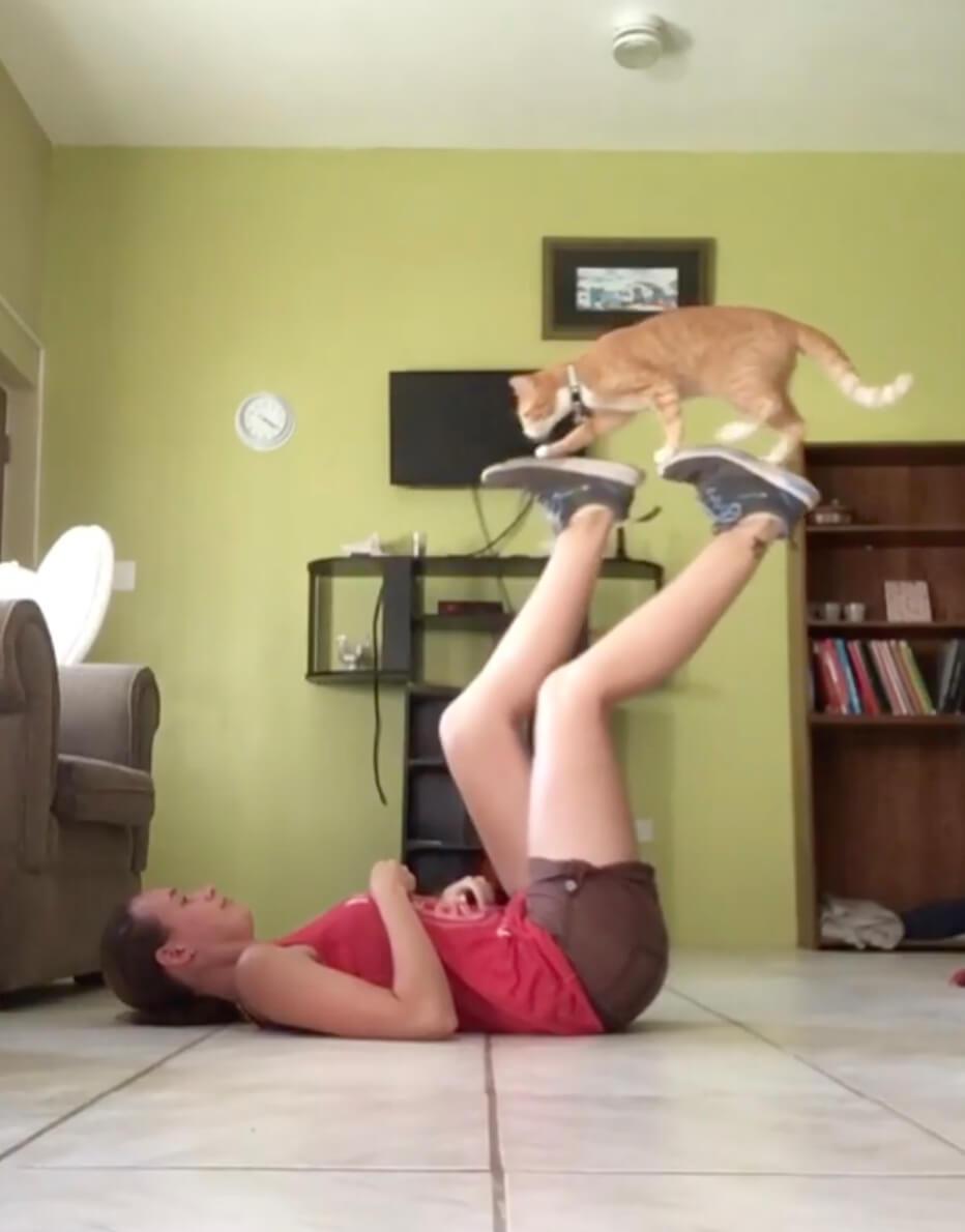 仰向けで自転車のペダルを漕ぐように回す人間の足の上を歩く茶トラ猫