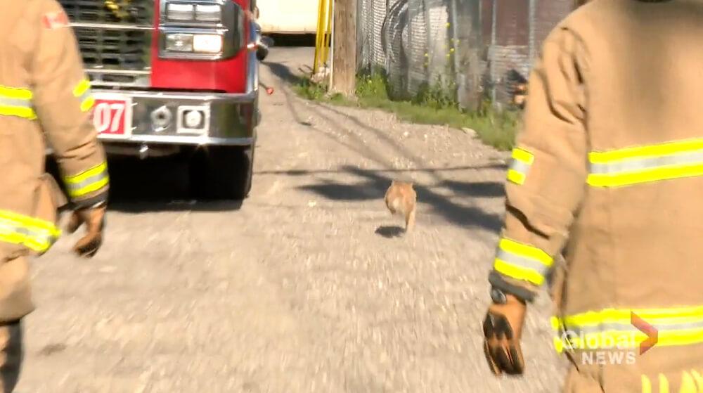 電柱の上から救出されて逃げ去る猫 in カナダ西部のアルバータ州にある都市・カルガリー