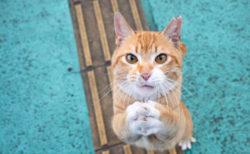 環境大臣賞はオッドアイの白猫ちゃん!命を救われた犬猫の写真コンテストが受賞作品を公表