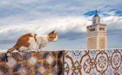 ギリシャからブルネイの猫まで♪ 犬猫写真家・新美敬子さんが世界で出会った猫たちのカレンダーが登場(2021年版)