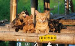 舞台はミャンマーと北海道!映画「岩合光昭の世界ネコ歩き」の第2弾が公開決定!語りは中村倫也
