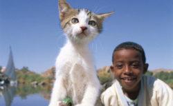 アイスランドからエジプトの子猫まで!150点の作品を展示する岩合光昭写真展「こねこ」札幌三越で開催