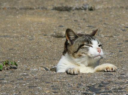 なぜ猫は潜ってしまうのか…?穴に出入りする猫たちの決定的瞬間を捉えた写真集「あなねこ」