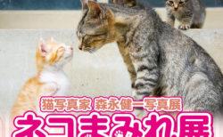 毎日ネコを追いかけ続ける猫写真家、モリケンさんの写真展「ネコまみれ展」が山口県で初開催