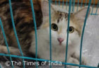 インドの国際空港で飼い猫が行方不明に…!4日間にもおよぶ捜索活動の末に無事発見される
