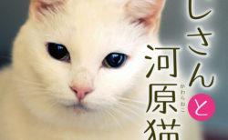 河川敷に捨てられたネコを守ろうとしたのは…3名のおじさんだった!書籍「おじさんと河原猫」