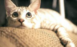 猫に囲まれて暮らした文豪・大佛次郎の記念館で謎解きイベント「ねこからの招待状」が開催中