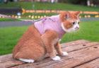 災害時のネコ脱走防止に!着せやすくて脱がせやすい猫専用ハーネスが6色カラーで展開