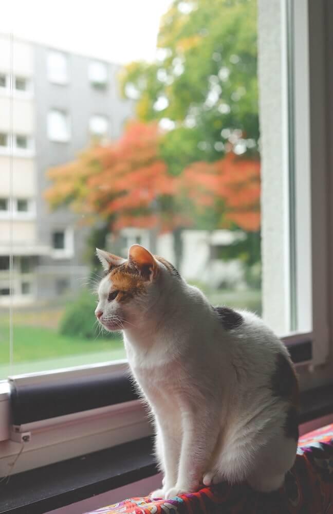窓の外を眺める飼い猫のイメージ写真