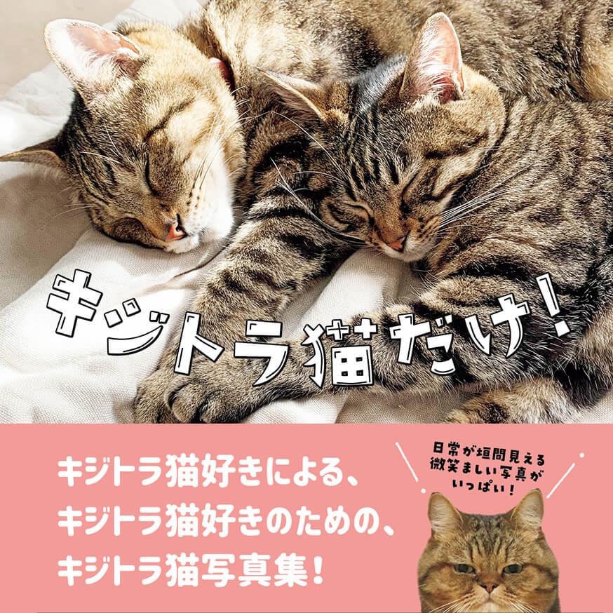 キジトラ&キジシロ専門の写真集「キジトラ猫だけ!」表紙イメージ