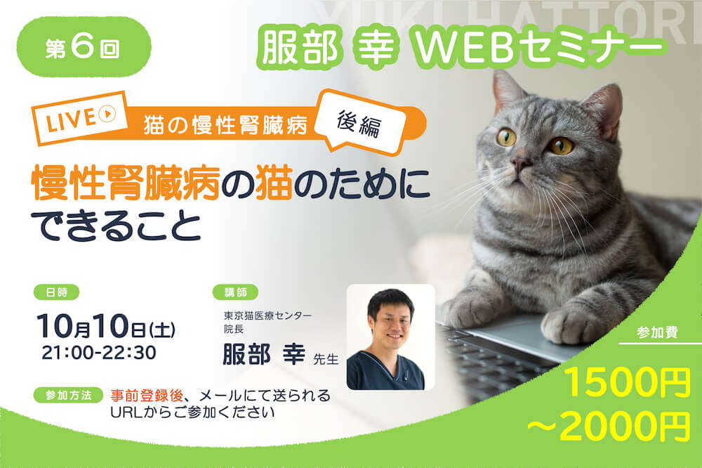 服部幸 獣医師のWEBセミナーvol.6「猫の慢性腎臓病~後編~慢性腎臓病の猫のためにできること」メインビジュアル
