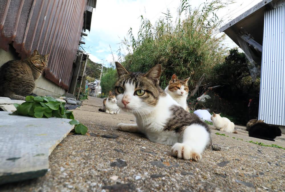 穴の中から出ようと半身を乗り出す猫 by 写真集「あなねこ」