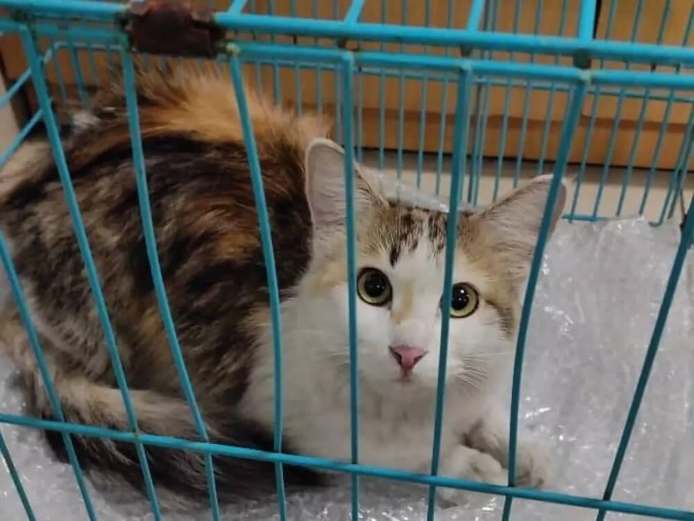 インディラ・ガンディー国際空港で行方不明になった後に捕獲された猫のNala(ナーラ)