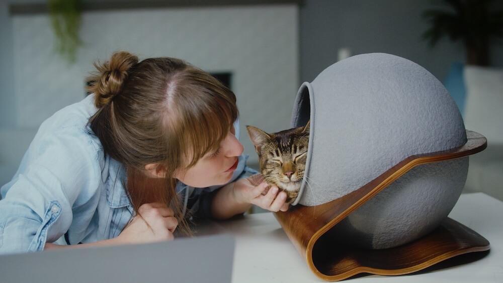 机の上に置いて一緒にリモートワークもできる猫用ベッド「CATSOLE(キャットソル)」