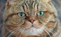 キジトラ猫は好きですか…?キジトラ&キジシロ柄の猫だけを収録したマニア向け写真集が登場
