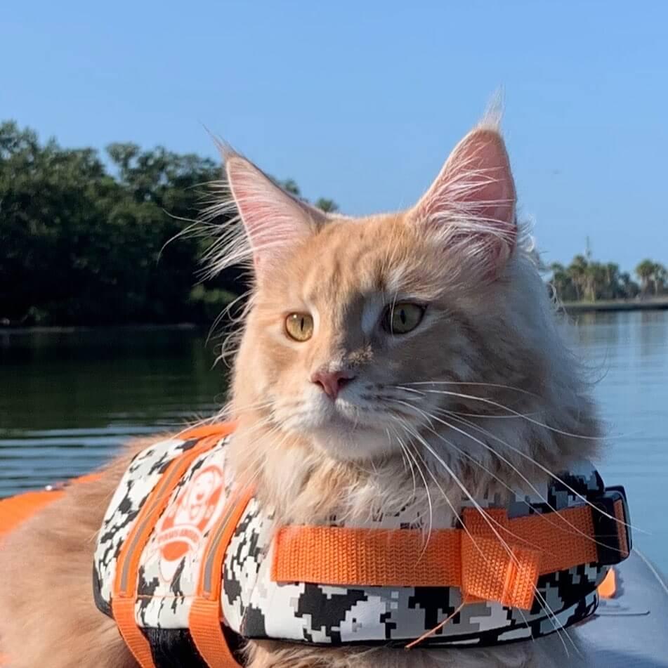 ライフジャケットを装着するウォータースポーツが好きな猫フィッシャーくん