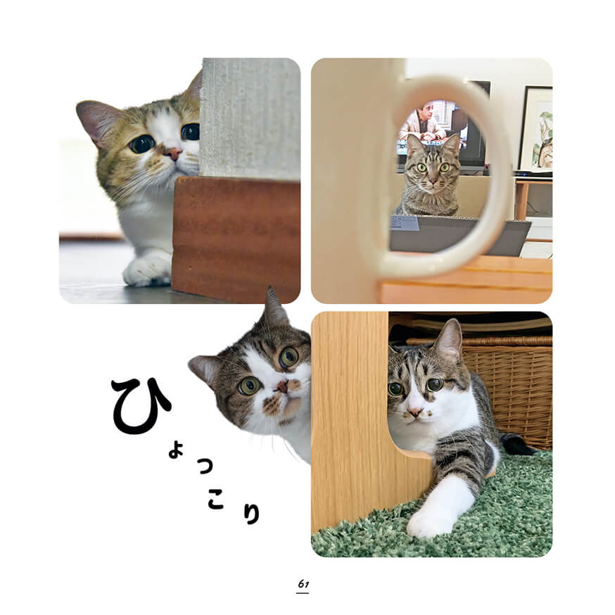 ひょっこり顔をのぞかせているキジトラ&キジシロ猫の写真 by キジトラ猫だけ!