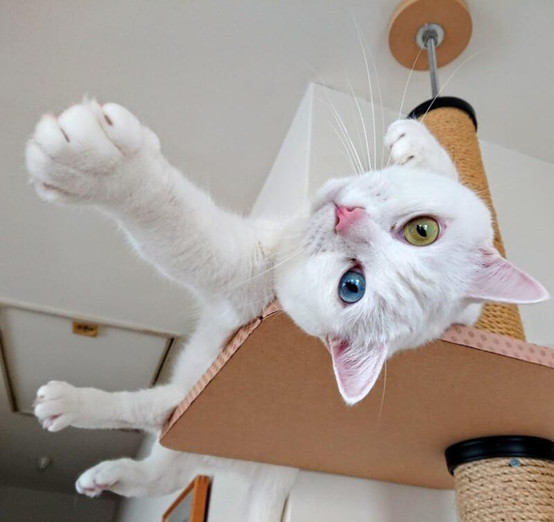 環境大臣賞を受賞した猫の写真「我が家の王様」