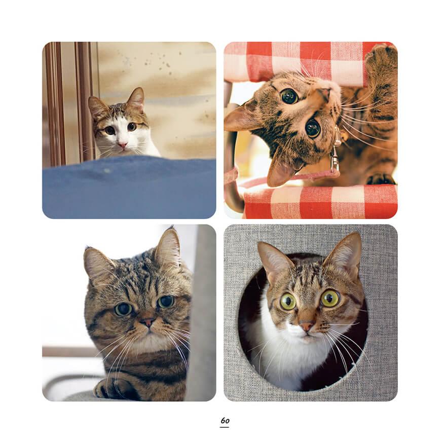 かくれんぼしているキジトラ&キジシロ猫の写真 by キジトラ猫だけ!