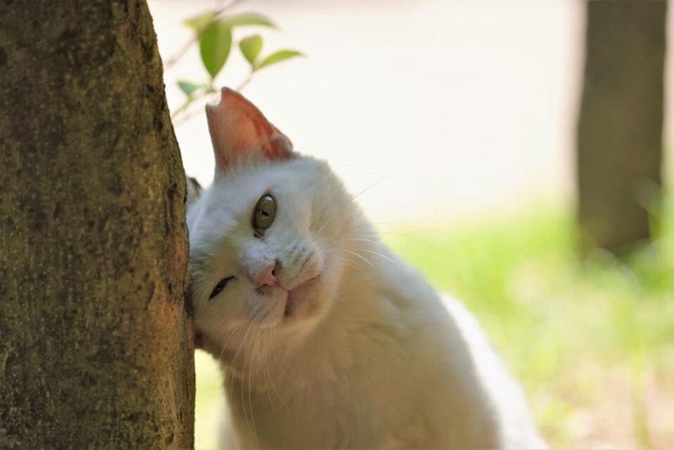 審査員特別賞を受賞した猫の写真「頑張ってるからね」
