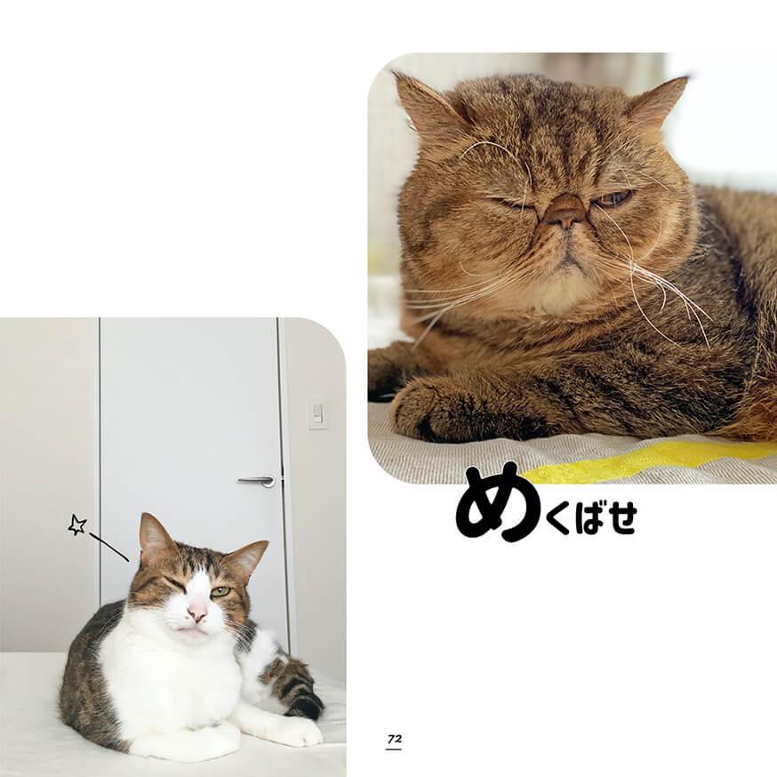 ウインク&目配せしているキジトラ&キジシロ猫の写真 by キジトラ猫だけ!