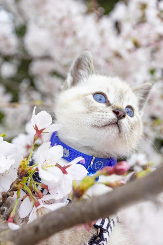 いのちつないだニャンコ部門で入選した猫の写真「生後1か月半!登るのが大好きな暦くん」