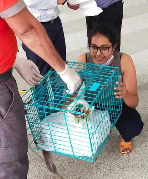 空港で行方不明になった後に飼い主と再開した猫のNala(ナーラ) by インディラ・ガンディー国際空港