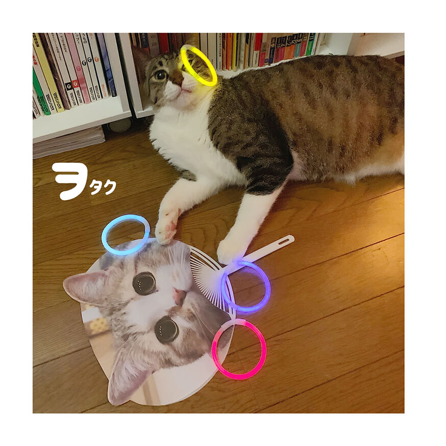 オタク風なキジトラ&キジシロ猫の写真 by キジトラ猫だけ!