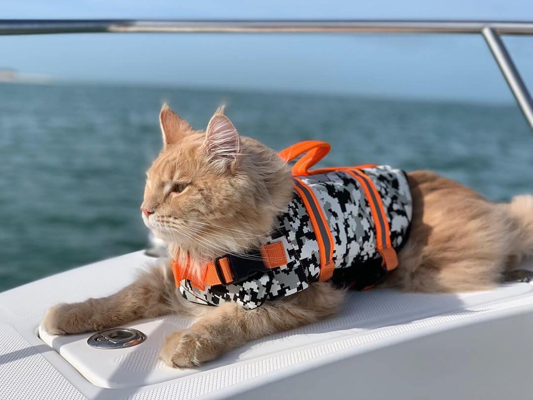 プレジャーボートに乗って風で長毛がなびくメインクーンのフィッシャーくん