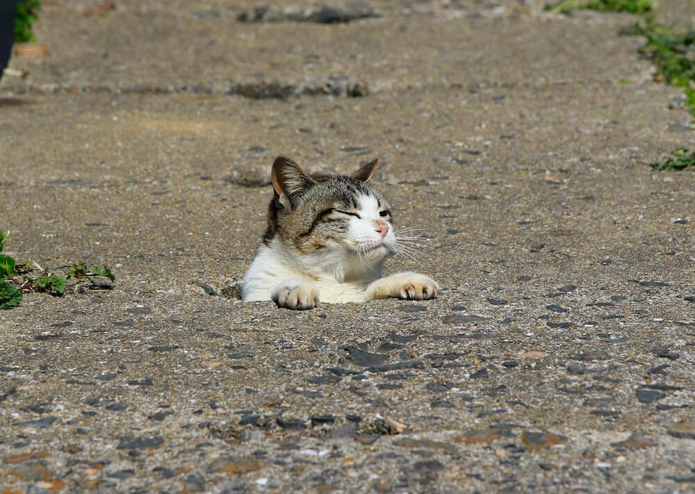 穴の中から顔を出して気持ちよさそうにする猫 by 写真集「あなねこ」
