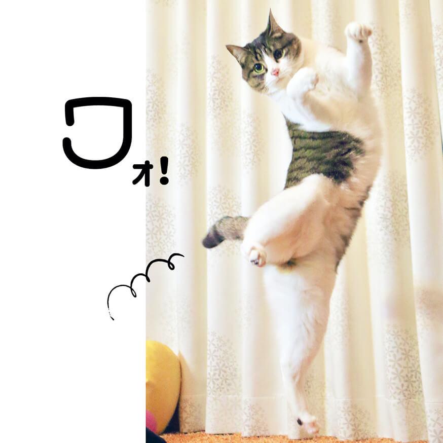 片足立ちしているキジシロ猫の写真 by キジトラ猫だけ!