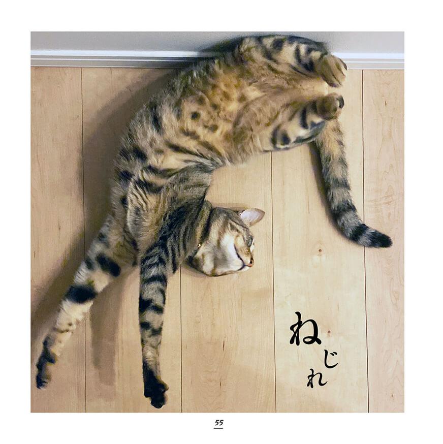 お腹を見せながらねじれポーズをするキジトラ&キジシロ猫の写真 by キジトラ猫だけ!