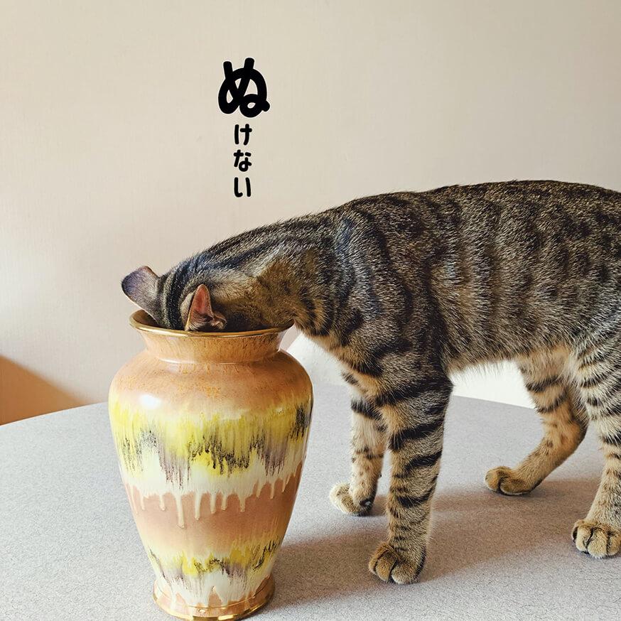 壺に頭がはまって抜けなくなったキジトラ猫の写真 by キジトラ猫だけ!