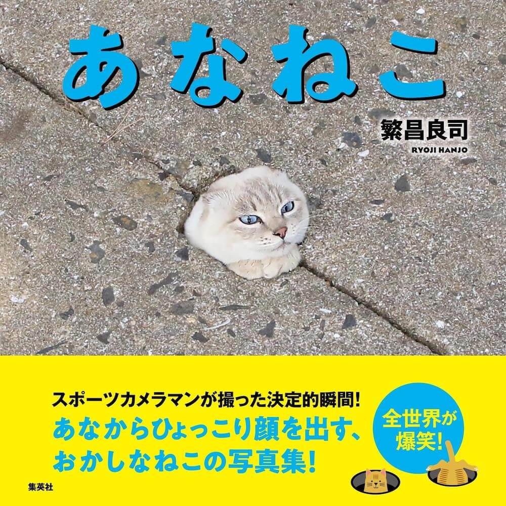 穴に潜ったり出入りする猫の写真集「あなねこ」の表紙