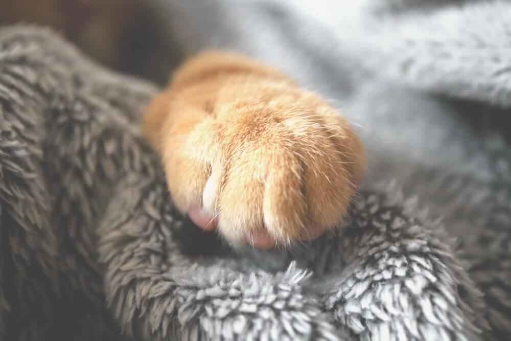 毛布の上に置いた猫の手 イメージ写真