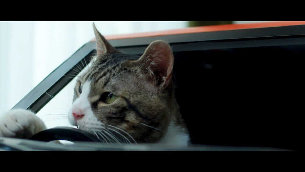 ねこ用軽自動車「にゃっさんデイズ」を運転する猫