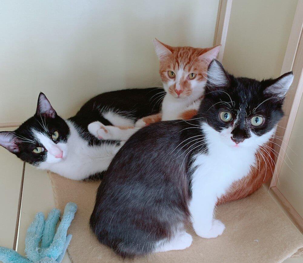 難病FIPを克服し絵本「ネルひかる」のモデルにもなった保護猫の「ネル」