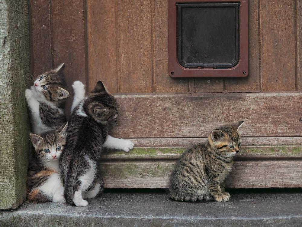 ベルギーのモンスで撮影された子猫たちの写真 by 岩合光昭