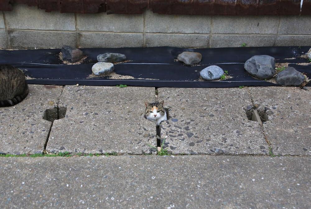 穴からひょっこりと顔を出す猫 by 写真集「あなねこ」